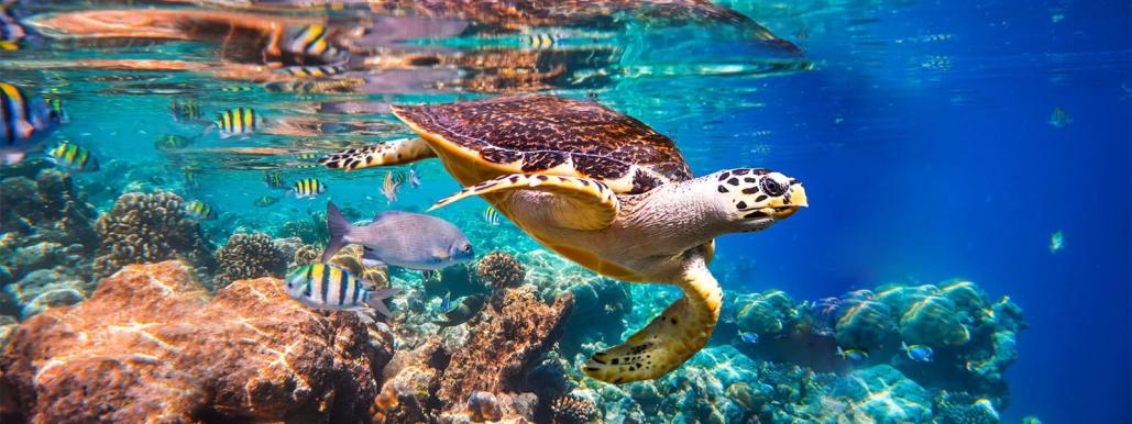 cabo adventures snorkeling cabo pulmo 02