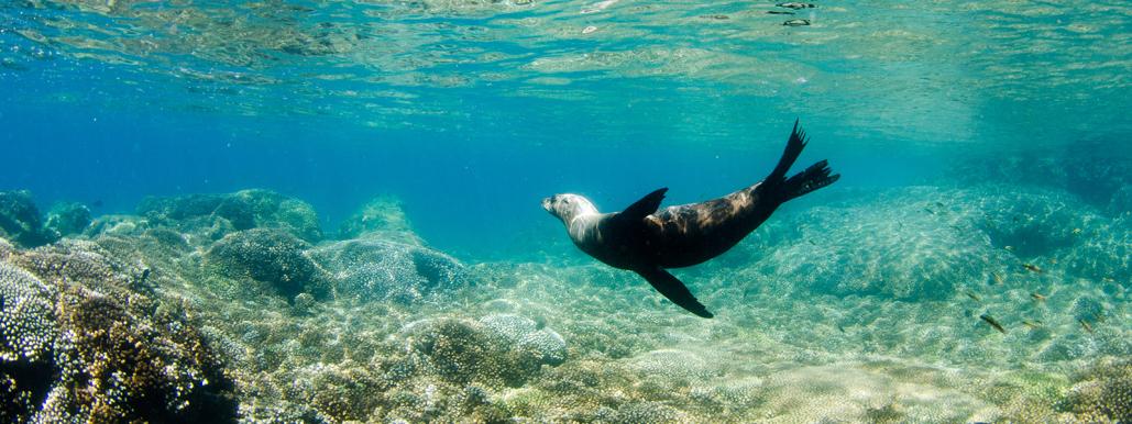 cabo adventures snorkeling cabo pulmo 07