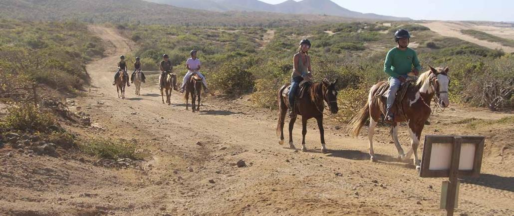 cactus beach desert ride 08