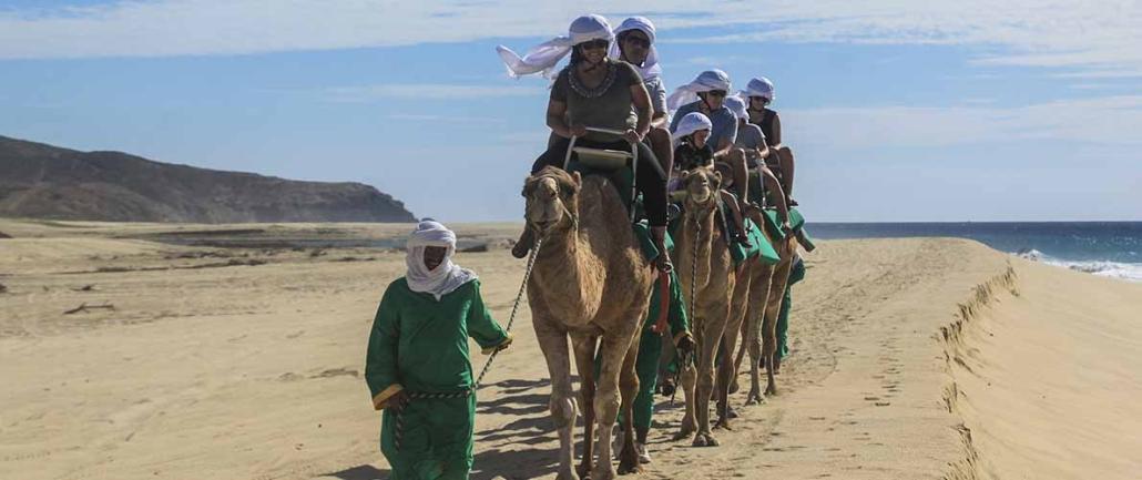 cactus camel ride 06