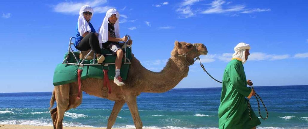 cactus camel ride 13