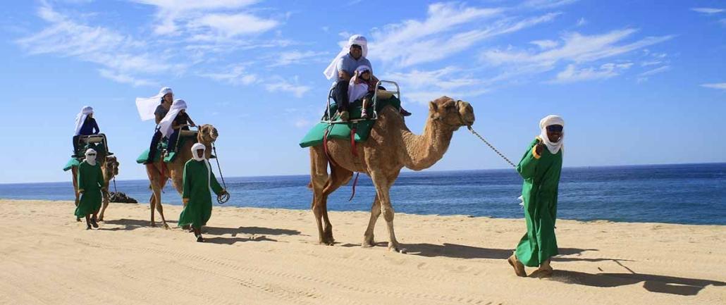 cactus camel ride 15