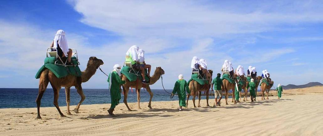 cactus camel ride 17