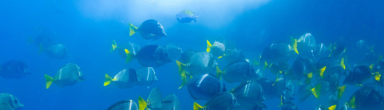 la gringa snorkel
